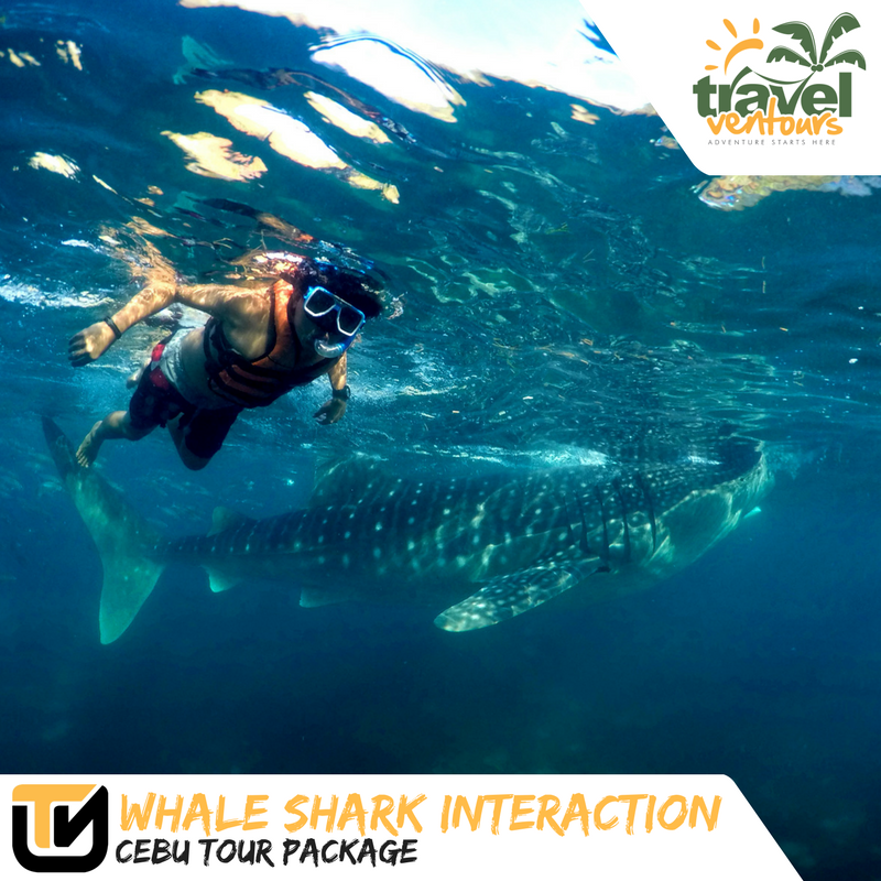 Whale Shark Interaction Cebu Tour Package